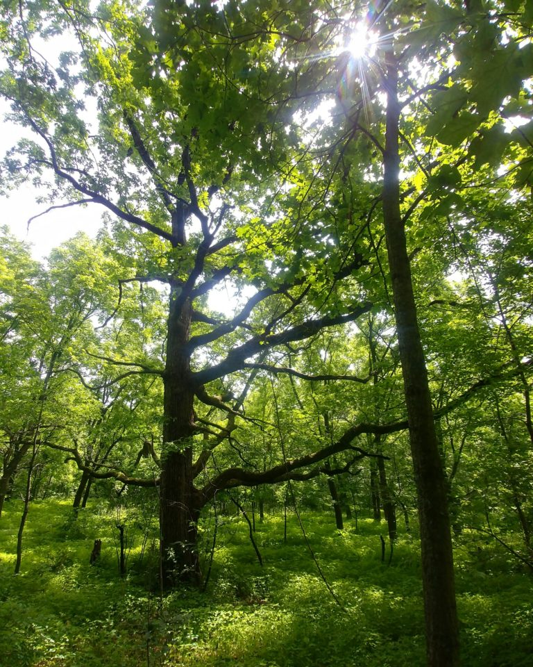 Photo of our Woodland Restoration