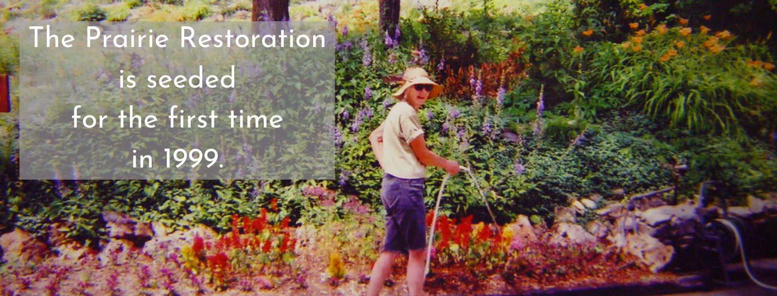 The Prairie Restoration is seeded for the first time in 1999