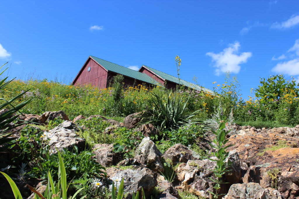 Photo of Chert boulders in the prairie with Barn in the background