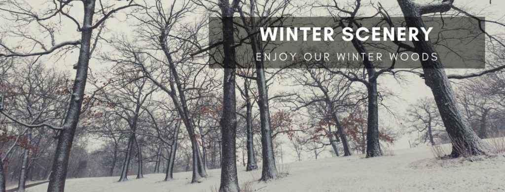 Winter Scenery. Enjoy our Winter Woods.
